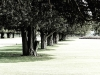 hampton_trees