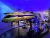 blue-whale_01