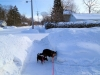 dogs_snow_drifts